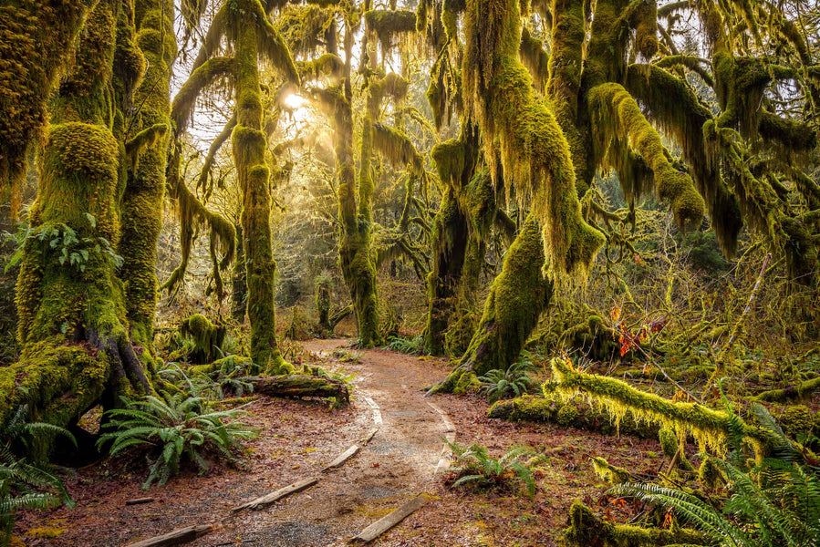 What To Pack For a Trip to Washington's Hoh Rainforest