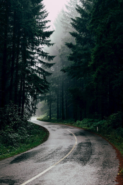 A wet winding country road through a foggy forest.