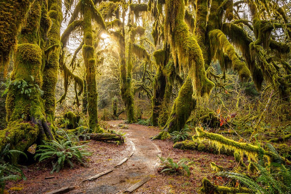 Visit the Hoh Rainforest