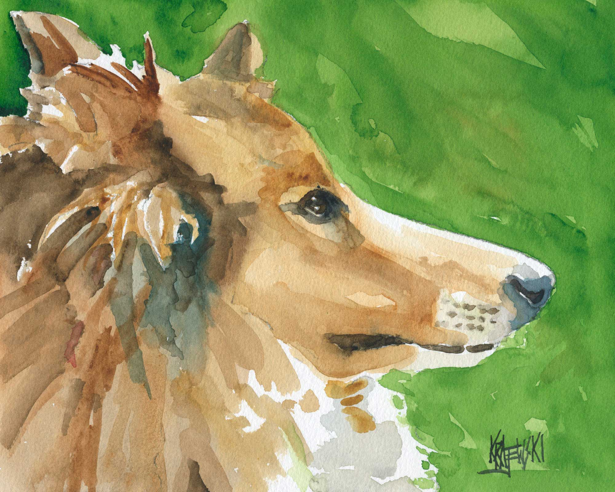 Collie Art Print - Ron Krajewski