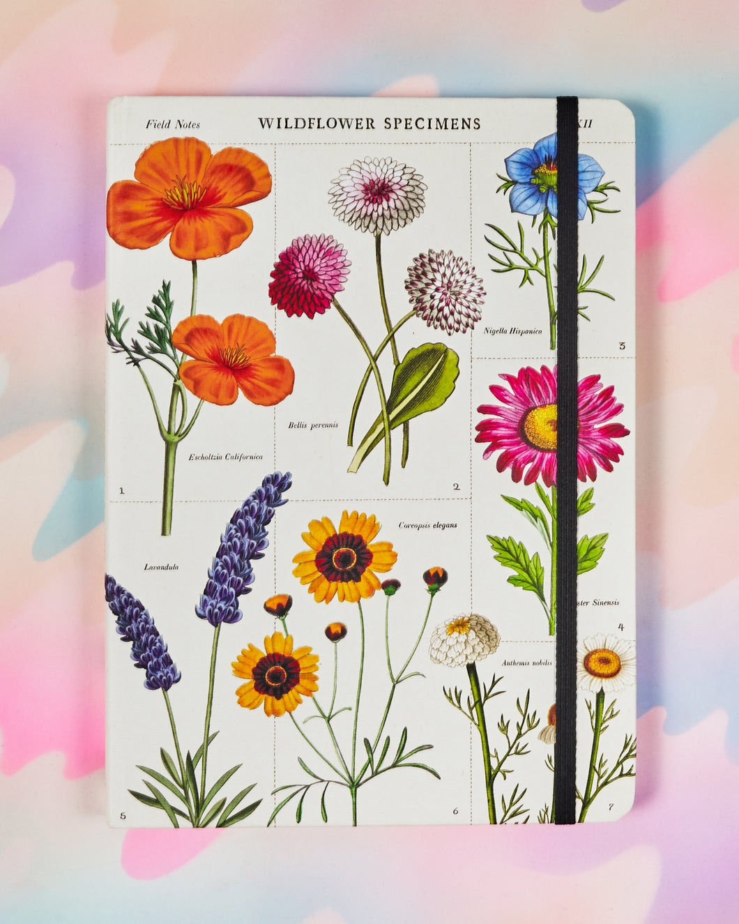 Cavallini & Co 6x8 Wildflowers Notebook