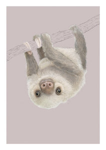 Two Toed Sloth NH15