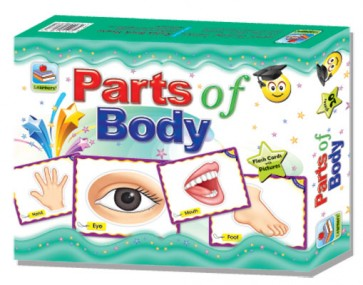 Parts Of Body Flashcards - Human Body Parts Flashcards - Flashcards