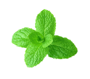 dōTERRA Spearmint Essential Oil - 15ml