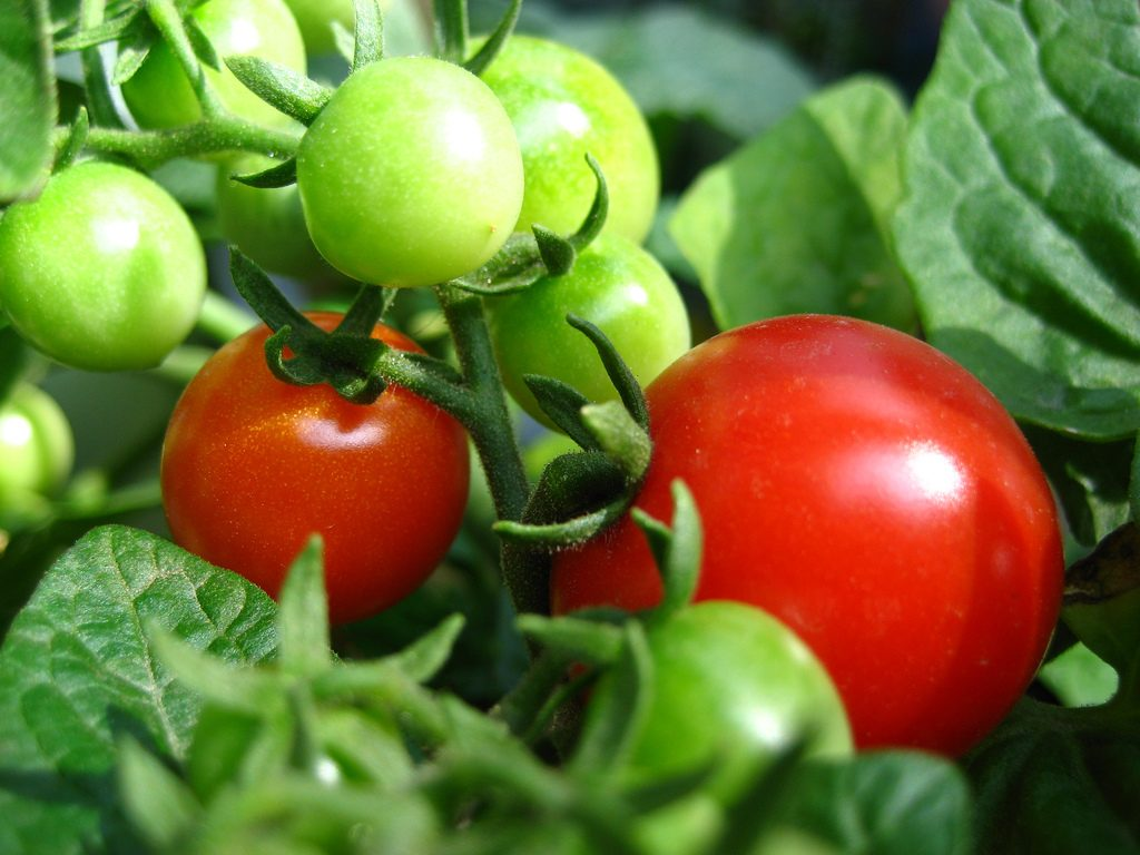 10 Tips For Greenhouse Gardening Success