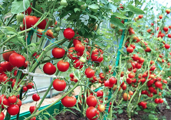 5 Greenhouse Plants To Get You Started