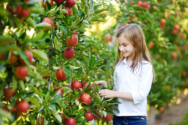 Does Your Garden Have Space For An Orchard