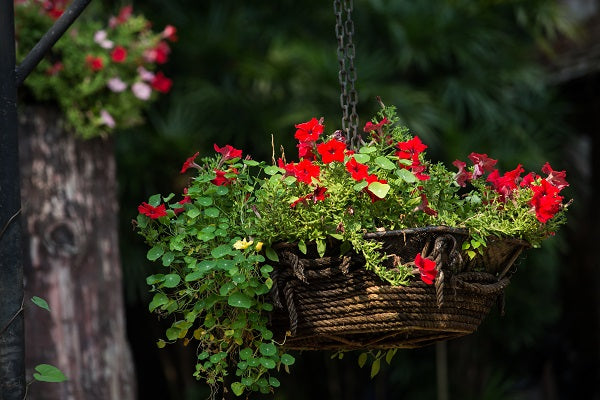 Get Your Garden Off The Ground With Fabulous Hanging Baskets