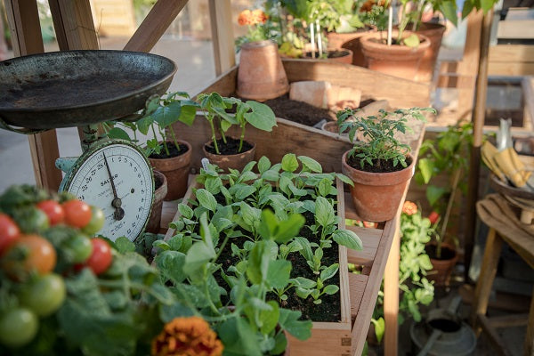 Greenhouse Types and Uses - A Decision To Be Made