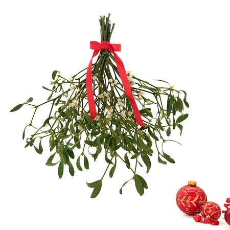 Growing Mistletoe In Your Garden
