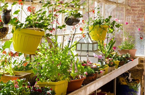 How Does A Greenhouse Work To Help Plants Grow