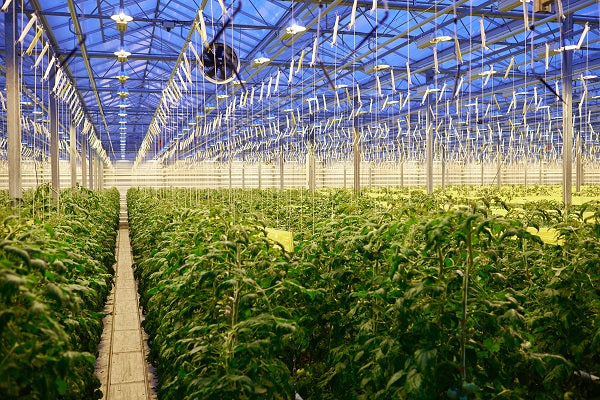 How Greenhouse Farming Works
