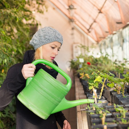 How To Damp Down Your Greenhouse