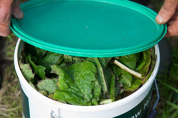 How To Make A Comfrey Feed