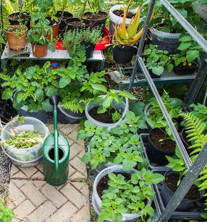 Organising Your Vegetable Patch