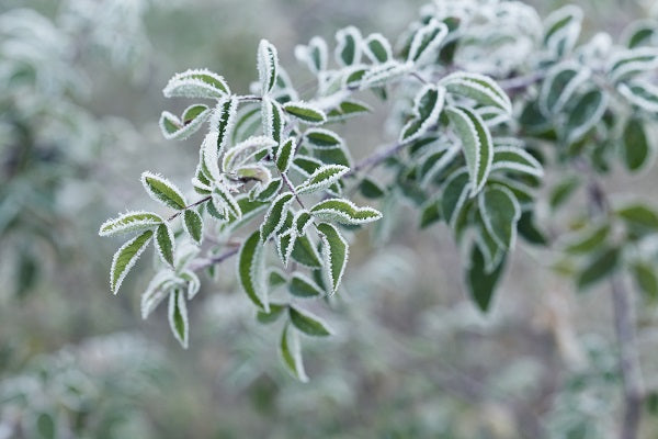 Protecting Your Plants From The Frost