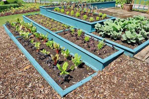The Advantages Of A Raised Vegetable Garden