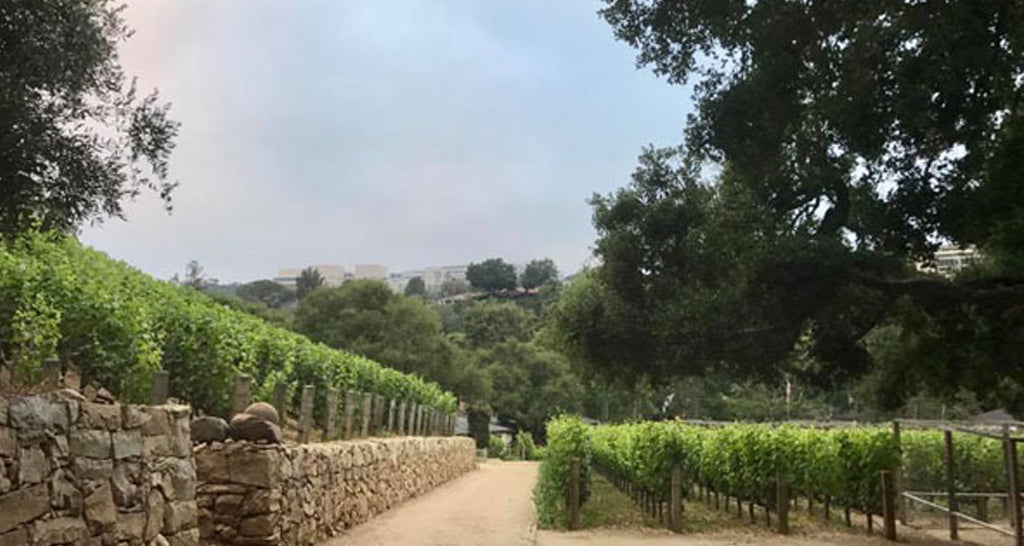 Resident: QUALITY TIME IN MORAGA WINERY, BEL AIR