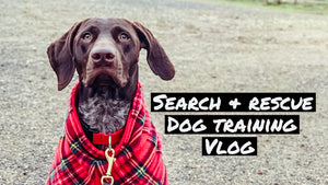 Building Search | Dog Training Vlog