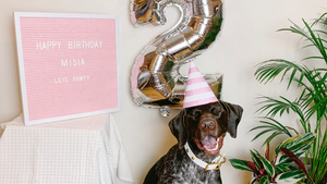 Happy Birthday Misia | Misia turns 2