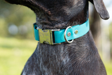 Adventure Slide Release Collar - Teal