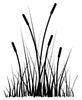 Small Cattails