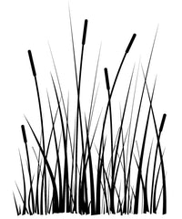 Large Cattails