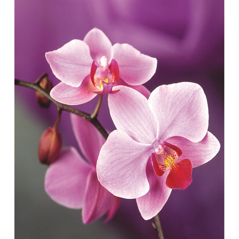 Diamond Painting-DIY Full Round Drill Phalaenopsis (35*45cm)