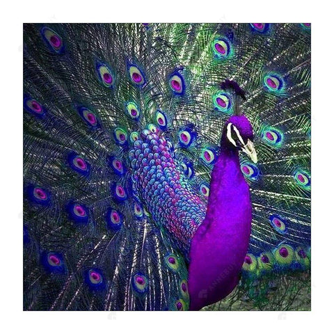 Diamond Painting-5D Full Drill Bird