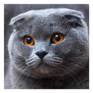 Diamond Painting-5D Full Square Drill Grey Cat