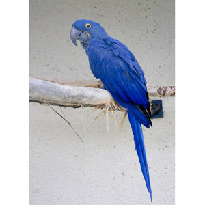 Diamond Painting-5D Full Round Drill Blue Parrot