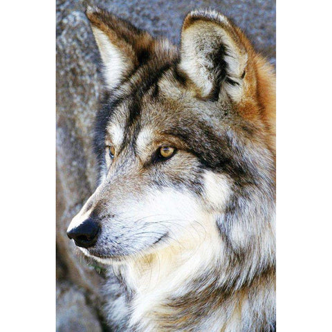 Diamond Painting-5D Full Round Drill Wolf