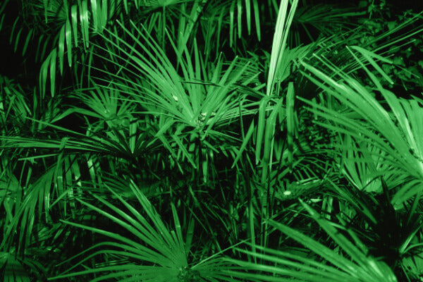 Saw palmetto is a DHT-blocking ingredient