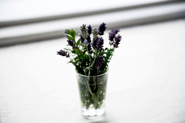 Lavender flowers in glass