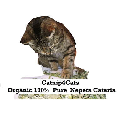 Large Bag Dried Extra Strong Catnip Organic Herb For Cats Nepeta Cataria #cats #catnip