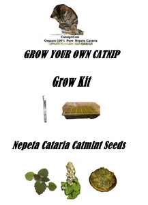 GROW YOUR OWN CATNIP KIT SEEDS + PROPAGATOR NEPETA CATARIA CAT MINT CAT GRASS #CATNIP #CATS