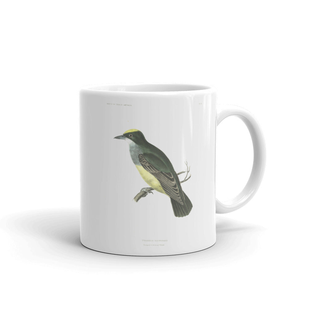 Cassins Kingbird Bird Mug Vintage Birds Illustration Tea Coffee Mugs Gift #CassinsKingbird
