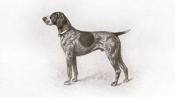 History of the German Shorthaired Pointer