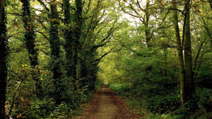 FOREST-PATH-GREEN