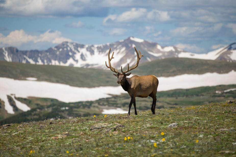 Nature-elk-wildlife-mountains