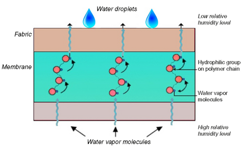 Hydrophilic-structures-moisture-transmission