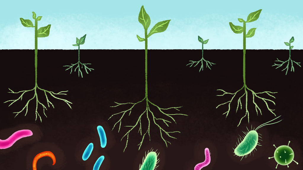 Symbiosis Between the Soil, Plant, and Microbial Organisms