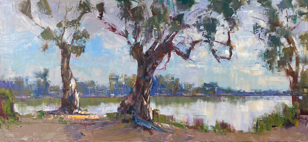 Large Gums on the Murray River