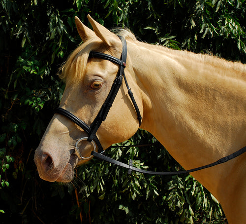 Leather Bridle With Cavesson Noseband