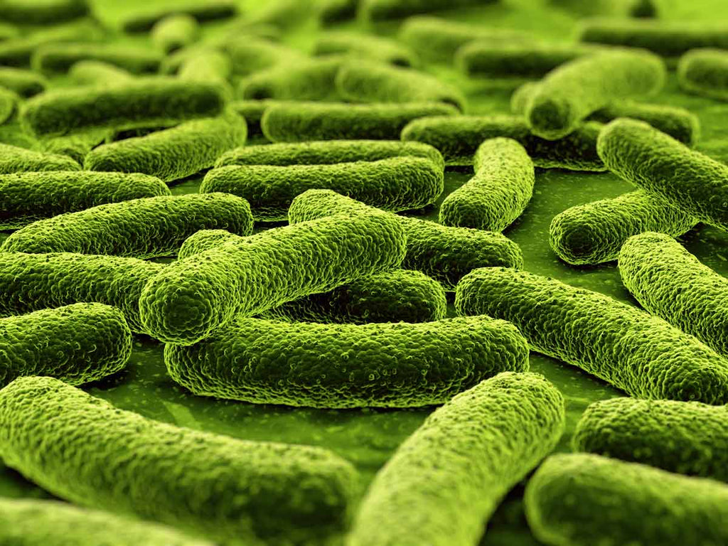 The Absolute Best Beneficial Bacteria for Your Plants