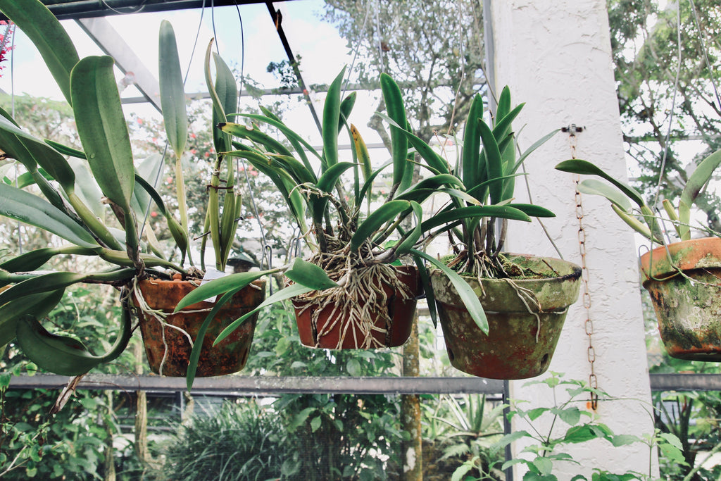 hanging potted plants roots
