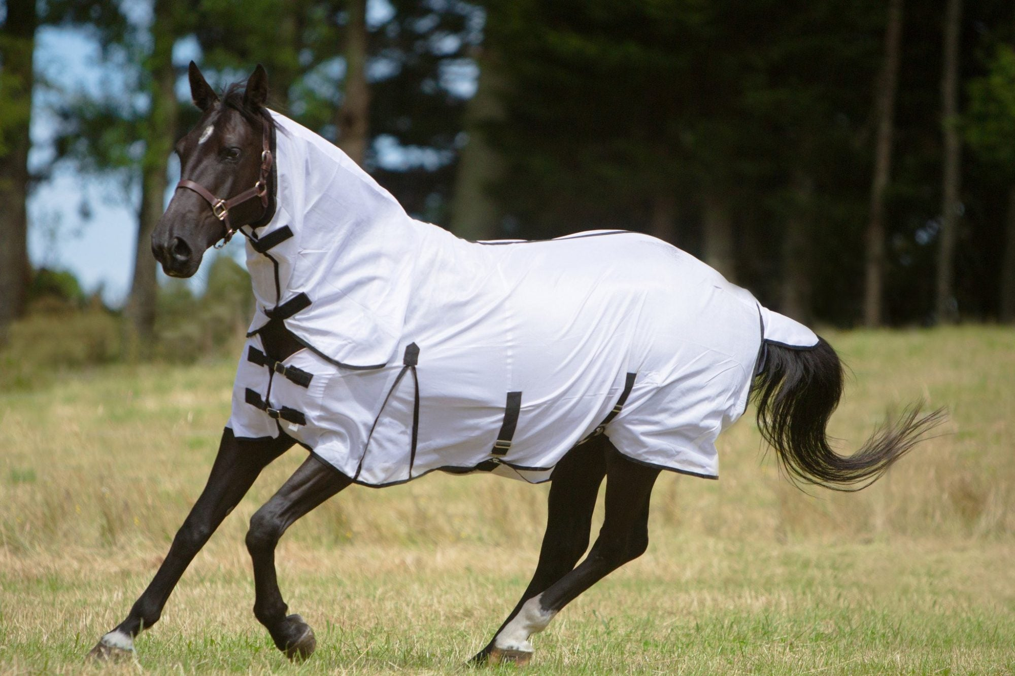 Horse cover sizing chart - how to choose the right rug for