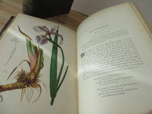The Native Flowers and Ferns of the United States in their Botanical, Horticultural, and Popular Aspects