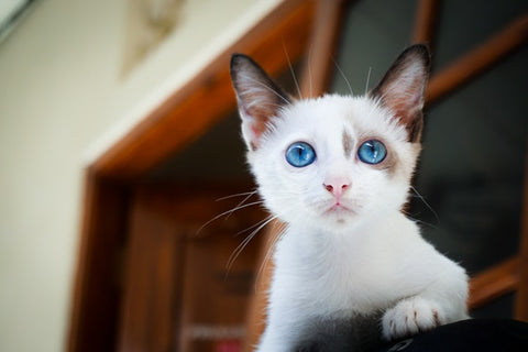 Sharp Eyes cat picture