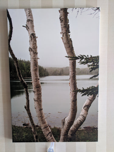 Trees over a lake, 16x24 canvas